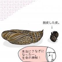 【絵日記】テツコの知…