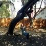 アボガドの木のブラン…