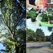 植物とコミュニケーシ…