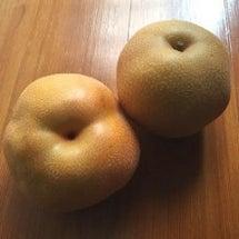 収穫時期、食べ頃の梨…