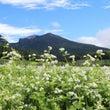 浅間山とそば畑