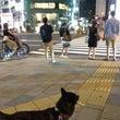 表参道の夜