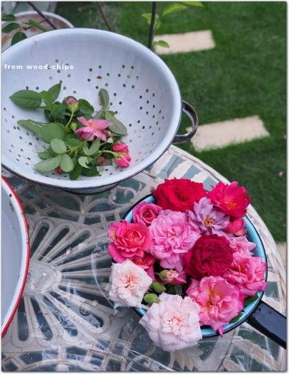 四季咲きバラ 秋の剪定