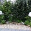 緑のパンダ!、上野公…