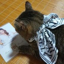 猫と安室ちゃん