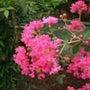 今日の誕生花はサルス…