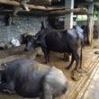 ネパールの農家で働き…