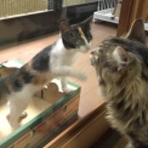 保護猫2匹とご対面