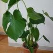 NEW観葉植物