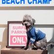 BEACH CHAM…