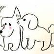 自由研究 犬と汗腺