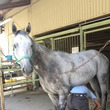 ★馬の再就職★