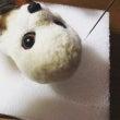 ★クマさん作ってまー…