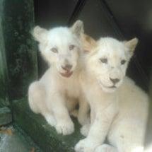 ホワイトライオンの名…