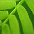 「緑」からのメッセー…