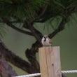 雀に睨まれた