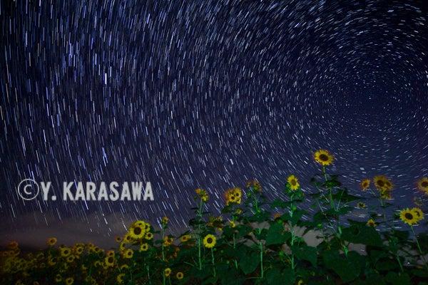 ヒマワリ星夜