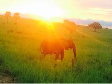 日の出 象