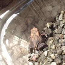 カエル その後