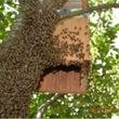 天然蜂蜜が入りました…