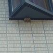 ハチの巣退治