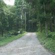 幻想の森は巨木巨木巨…