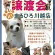 まるひろ川越店保護犬…