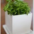 我が家の観葉植物~♪