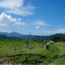 横田農場レポーーート
