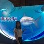 「海のハンター展」