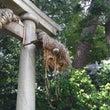 奥澤神社の大蛇祭り