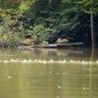 自然湖に毎年ちょっと…