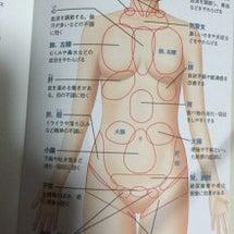 体地図 上半身(正…