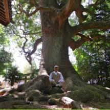 8月31日今回の巨木…