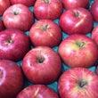 秋の味覚 りんご&栗