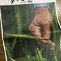 週末、埼玉小麦の利き…