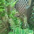 再びのアゲハ蝶。