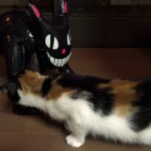 黒猫の人形にびっくり…