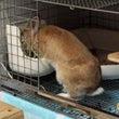 ウサギを飼うことの難…