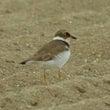 海岸の鳥・・・4