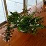 陶板で野の花