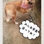犬の日写真展写真受付…