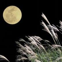 お月見のアレンジ