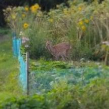 鹿さんがいた!