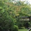 【庭園】庭園にも秋の…