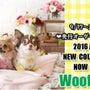 Wooflink♡秋…