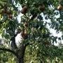 果樹園が楽しい季節