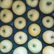今年初の青りんご