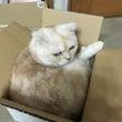 箱詰めれんちゃん