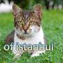 イスタンブール・愛さ…